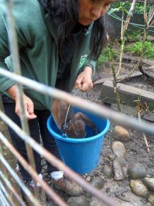 centro ecologico zanjarajuno, chorongo monkey