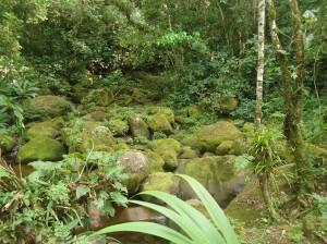 jungle at Tamushal, animal rescue center Cerelias, Peru