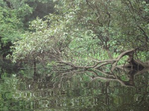 black water amazon peru, aguas negras
